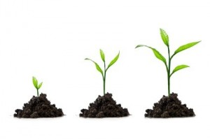 Growing your professional services firm